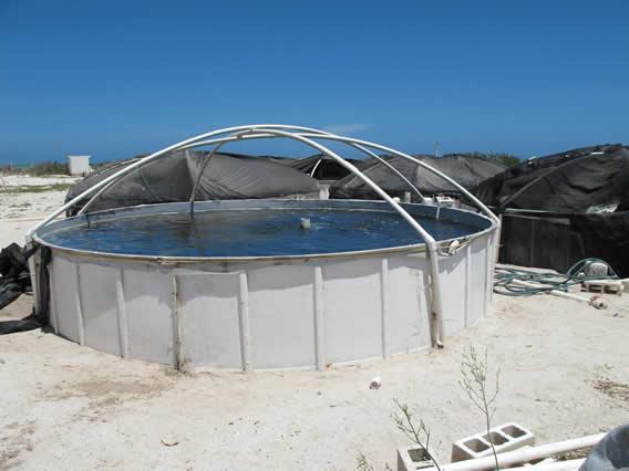 Unam campus sisal for Criadero de camaron en estanques circulares