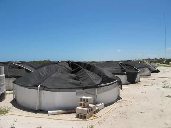 Unam campus sisal for Fertilizacion de estanques piscicolas